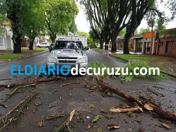 Sobre Avenida Mitre se desprendió una rama y pudo haber provocado graves daños